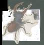 staghorn beetle stamp