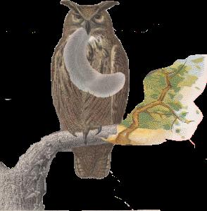 owl_squirreltail